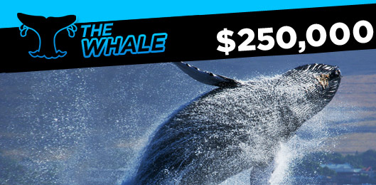 the 888 whale promo